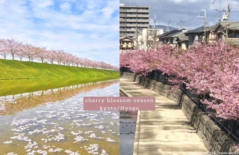 2021日本人最想去的關西賞櫻景點3選 京都/兵庫